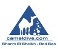 CAMEL DIVE CLUB & HOTEL, Sharm El Sheikh is looking to hire a Sales&Marketing Manager