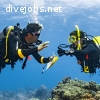 Divemaster Internship program - NO WORKING required