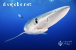 Divemaster job for Liveaboard cruises in the Azores !