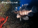 Diving & Marine Conservation Internship