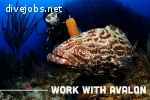 FULL TIME OUTDOOR INDUSTRY SCUBA DIVING/ECO TOURISM SALES REPRESENTATIVE