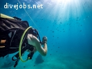 Marine Conservation Research Assistant