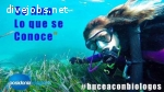 POSIDONIA ECOSPORTS INTERNSHIP: MARINE BIOLOGY-TECHNICAL-CAVES!!!